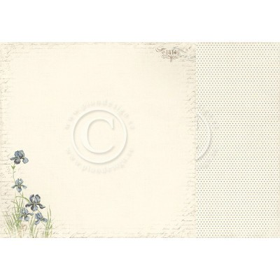 Pion Design Shoreline Treasures Iris Sibirica